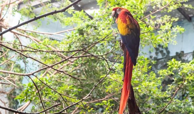 Bela arara colorida na floresta verde