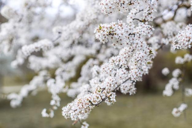 Bela árvore de florescência