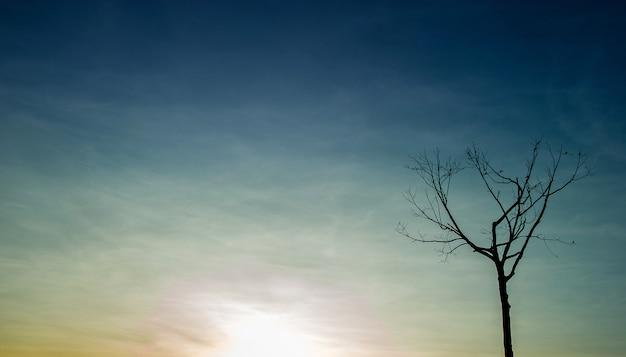 Bela árvore e céu conceito natural