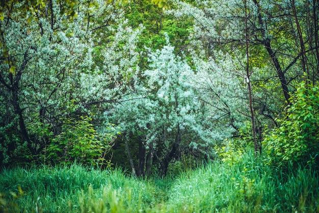 Bela árvore entre arbustos