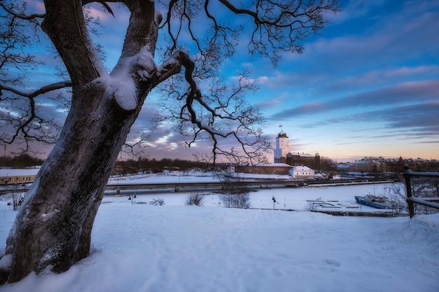 Bela árvore grande no fundo do castelo na cidade de vyborg, no inverno, na ilha do golfo da finlândia, no pôr do sol.