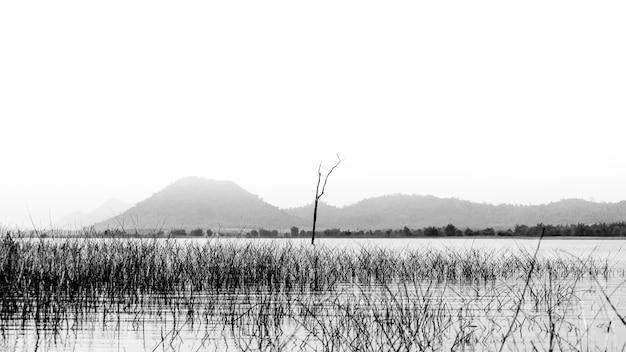 Bela árvore no rio com a montanha.