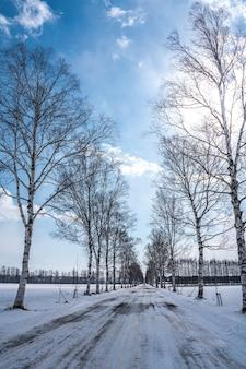 Bela árvore sem folhas no inverno