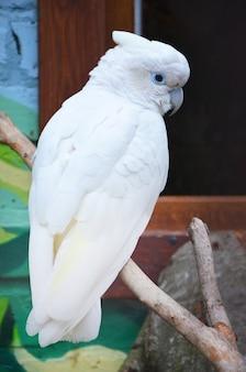 Bela ave papagaio cacatua em um galho