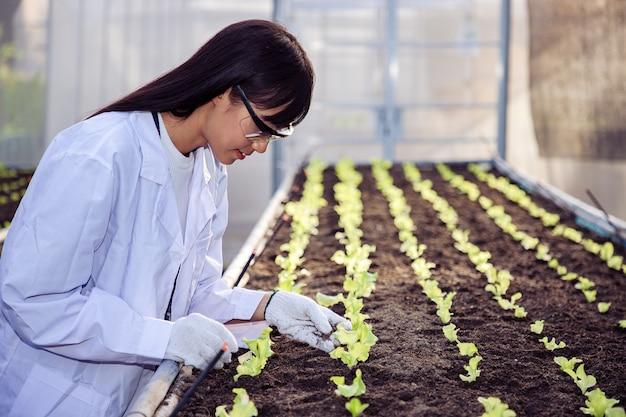 Bela biotecnologista asiática verifica e ajusta vegetais de carvalhos verdes em fazenda orgânica para espécies de pesquisa.