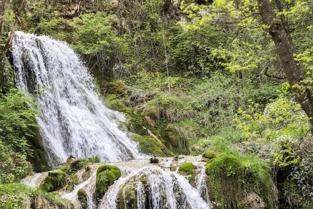 Bela cachoeira na floresta arborizada