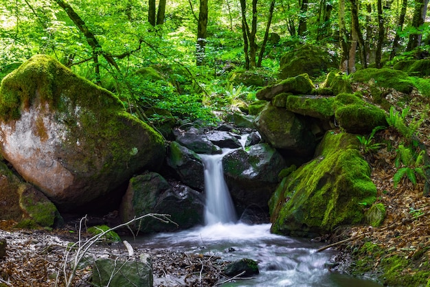 Bela cachoeira na mata verde