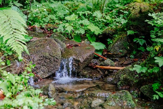 Bela cachoeira na montanha com árvores ao fundo