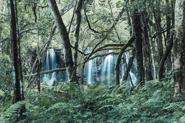 Bela cachoeira na selva de misiones. misiones, argentina.