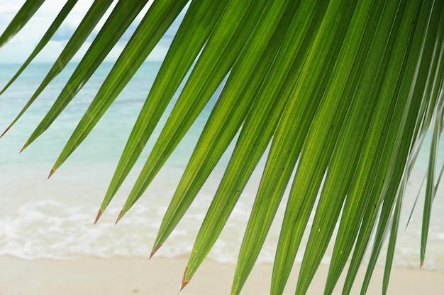 Bela cena tropical, ótimo papel de parede e fundo