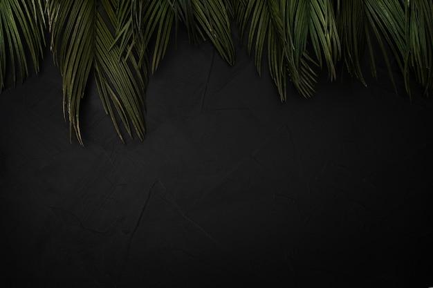 Bela composição de folhas de palmeira com copyspace