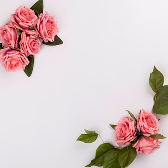 Bela composição rosa