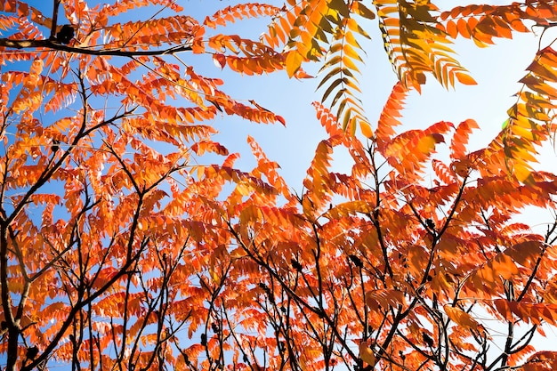 Bela copa de árvore com folhas vermelhas