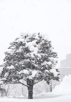 Bela da cidade de sapporo na neve do inverno, sapporo, hokkaido, japão