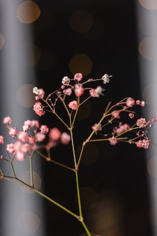 Bela decoração lindas flores coloridas secas em preto escuro, papel de parede.