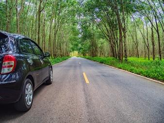Bela estrada através das árvores
