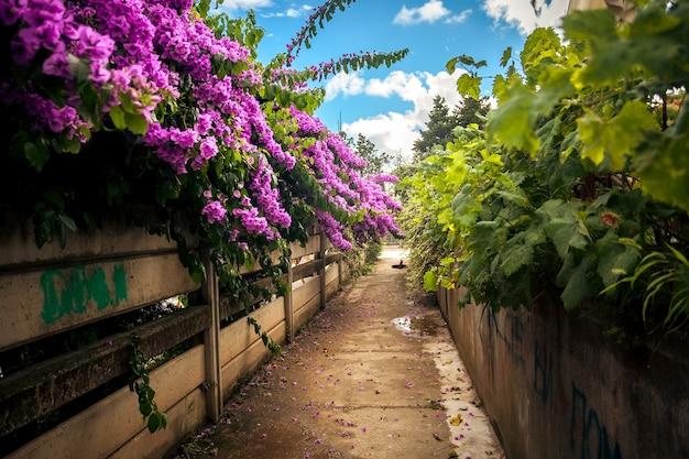 Bela estrada cultivada com arbustos e buganvílias