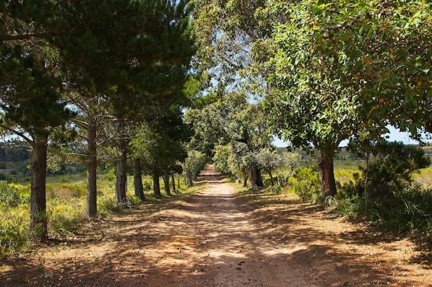 Bela estrada de cascalho cercada por árvores e campos cobertos de grama