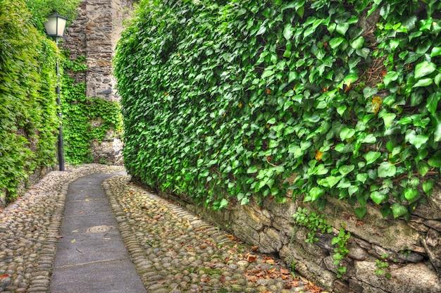Bela estrada de cascalho cercada por vegetação