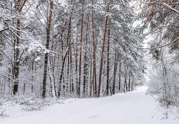 Bela estrada de neve branca de floresta de inverno nevado com uma pista de esqui coberta de árvores e arbustos