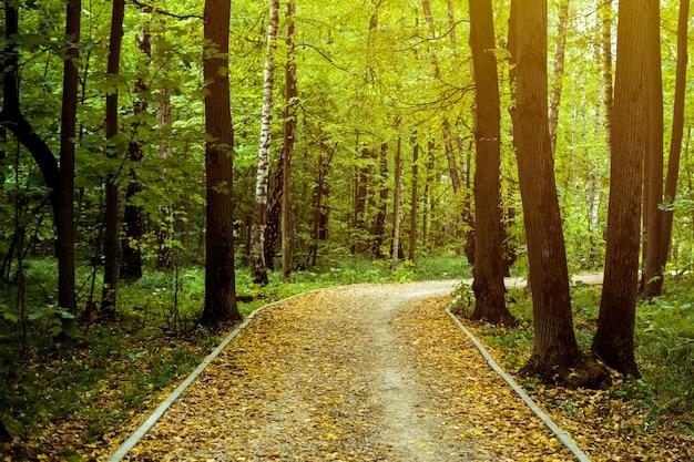 Bela estrada incrível caminho através das árvores na floresta de outono com folhas amarelas caídas conceito