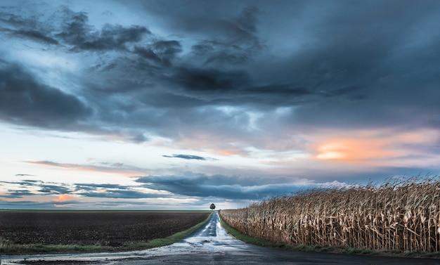 Bela estrada passando por uma fazenda e um milharal com uma árvore no final sob o céu colorido