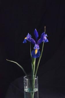 Bela flor azul fresca no vaso com água