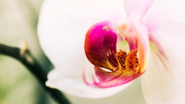 Bela flor da orquídea que floresce ao ar livre