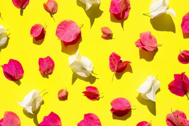 Bela flor de buganvílias vermelhas e brancas em amarelo