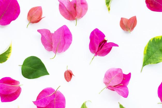 Bela flor de buganvílias vermelhas em branco
