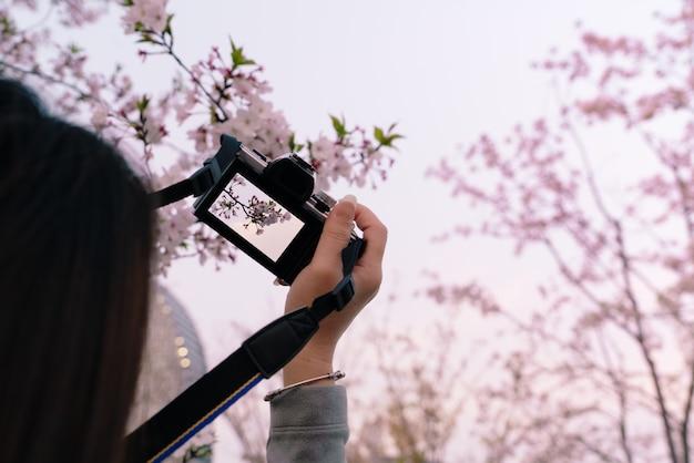 Bela flor de cerejeira sakura em tempo de primavera na mão de uma mulher segurando a câmera dslr