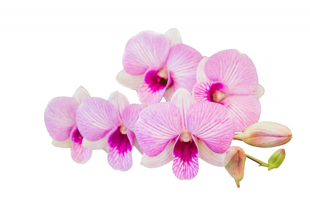 Bela flor de orquídea em fundo branco