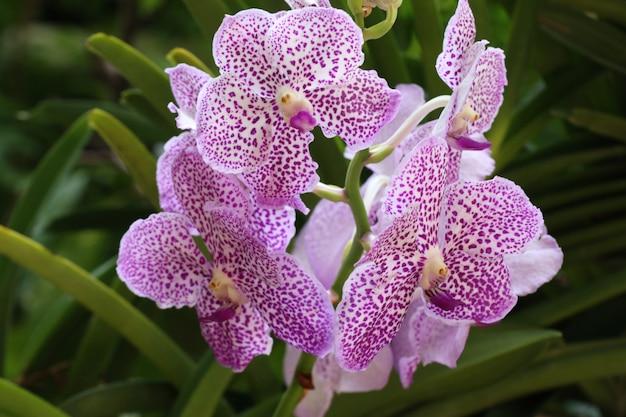 Bela flor de orquídea em tropical