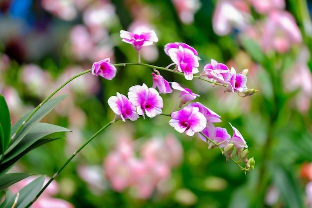 Bela flor de orquídea no jardim de orquídeas