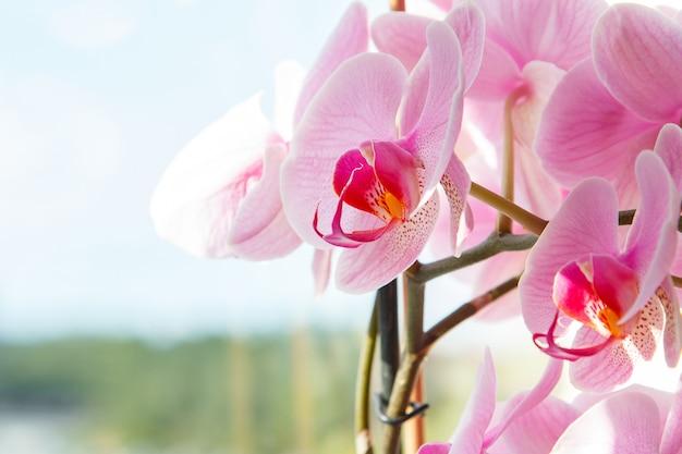 Bela flor de orquídea