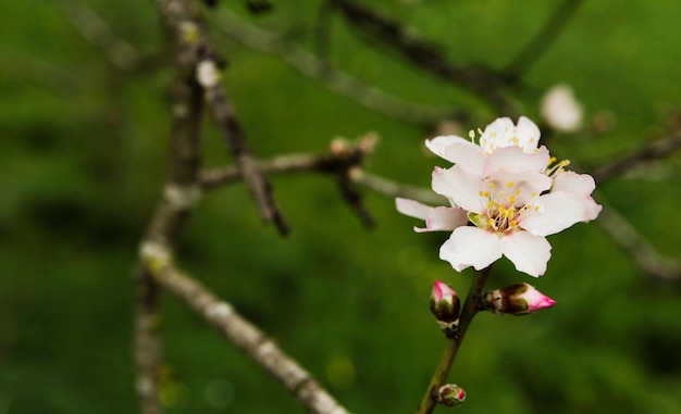 Bela flor desabrochando em uma árvore