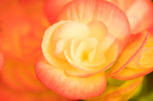Bela flor fresca brilhante