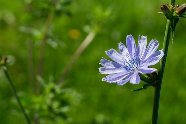 Bela flor lilás no campo verde