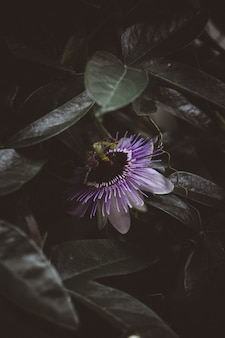 Bela flor lilás, rodeada de hortaliças