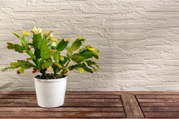 Bela flor na mesa de madeira na parede na luz solar.
