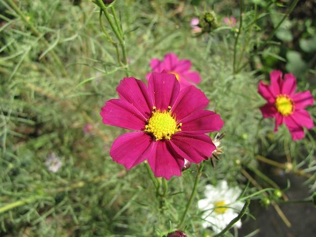 Bela flor vermelha com peça central amarela