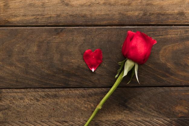 Bela flor vermelha fresca perto de pétalas
