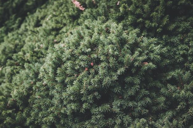Bela flora verde florescendo no jardim, fundo de verão. fotografia de pétalas mágicas em fundo desfocado