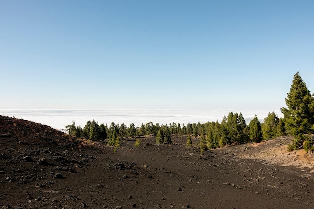 Bela floresta acima das nuvens