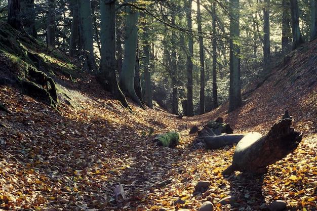 Bela floresta com folhas amarelas no chão rochoso durante o dia