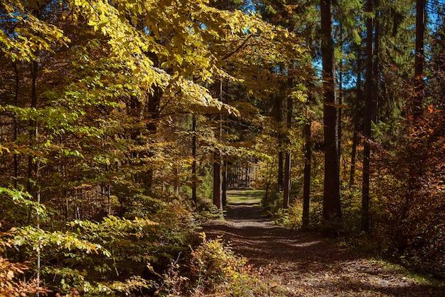 Bela floresta com grama seca, árvores amarelas, laranja e marrons, folhagem caída, céu azul em dia de outono. paisagem incrível com clareira na floresta e árvores coloridas. outono quente e ensolarado na ucrânia.