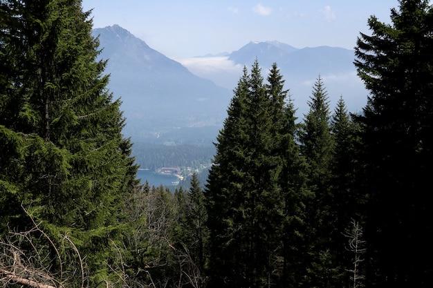 Bela floresta com muitos pinheiros e altas montanhas cobertas de neve ao fundo