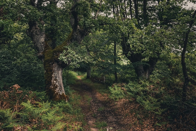 Bela floresta com tons de verde no país basco