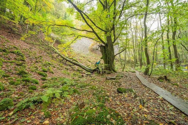 Bela floresta de faia verde no sul da suécia. com árvores verdes exuberantes e o chão da floresta repleto de folhas coloridas de laranja e vermelho