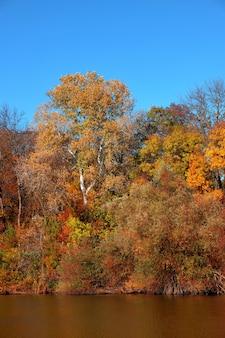 Bela floresta de outono à beira do lago, contra o fundo de um céu azul claro sem nuvens